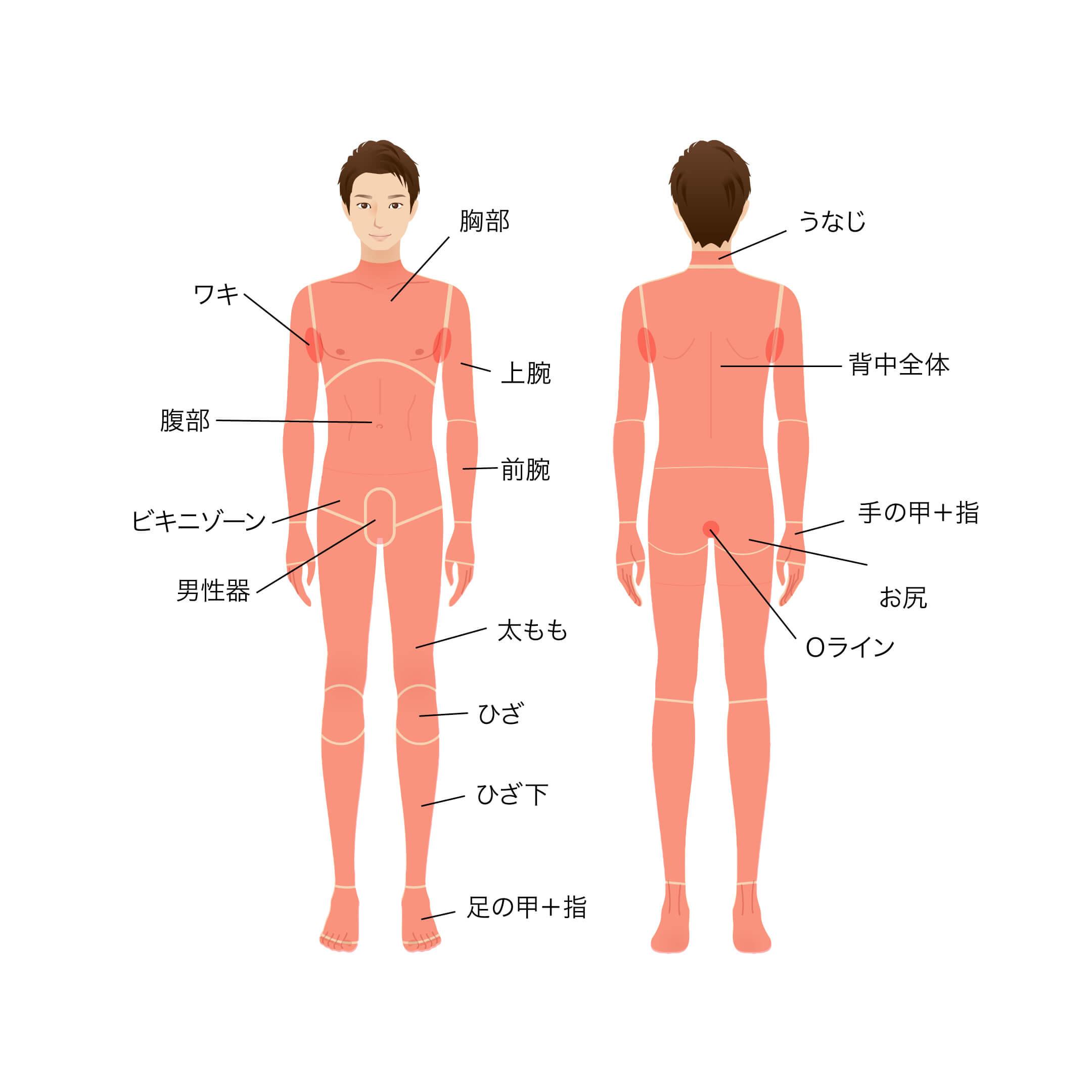 全身・胸部・ワキ・上腕・前腕・腹部・ビキニゾーン・男性器・太もも・ひざ・ひざ下・足の甲+指・うなじ・背中全体・手の甲+指・お尻・Oライン